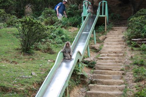 嵐山モンキーパークいわたやま すべり台